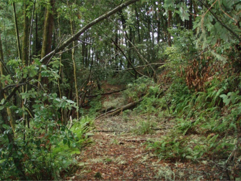 typical abandoned logging road