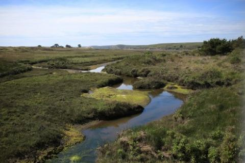 creek at Pt. Reyes