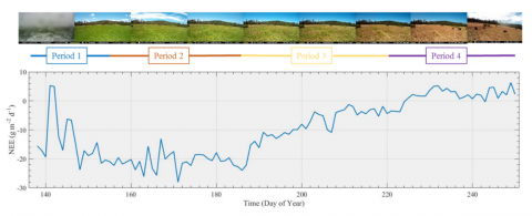 graph of Loney Meadow